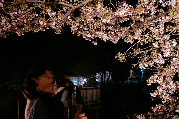 n_yozakura-11